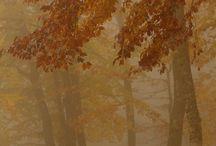 S'insinua la nebbia