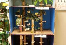 γη φυτά