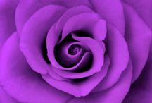 It's a Purple World