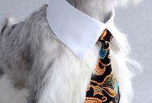 gravata pets