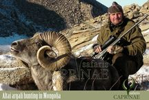 Altai argali hunting in Mongolia