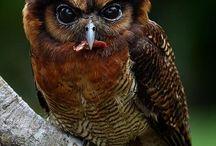 Owls / by Debbie Kelley