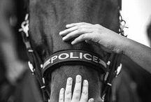 Politi hest