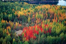 Ilmakuvia luonnosta, Aerial photos from nature / Aerial photos, Finland, Estonia
