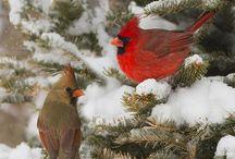 Birds / Uccelli
