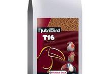 Toucan Feed