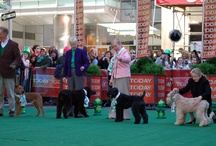 AKC Celebrates / What better way to celebrate our favorite holidays and events at AKC than with man's best friend?
