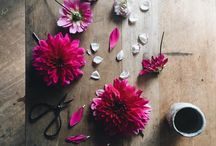 Botanical Beauties / All things floral and flowery. Botanical, nature and ideas for flowers