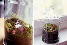 terrariums-plants-flowers / by Linda Chay