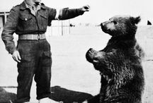 Polish soldier Wojtek the Bear