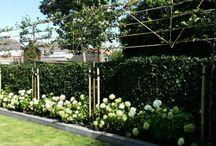 Nieuwbouw tuin
