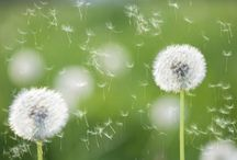 Fight Pollen Allergy Symptoms With Natural Remedies And Celebrate The Spring!