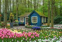 Dream place