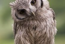 What A Hoot! / by Robin
