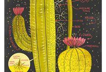 cactus / kaktüs