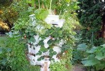 Vegetables, etc uprights