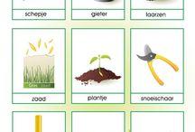 tuinieren met kleuters