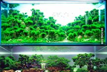 Aquascaping examples