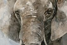 Akvarel dyr / Akvarel