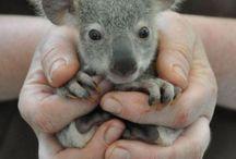 Amazing Australia / Everything that is amazing about Australia