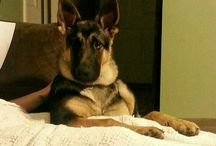 The GSD