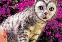 gatti veri e dipinti / Ritratti  di gatti o  eventi legati al gatto