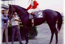 Ruffian race horse