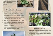 Scott Farms Plants