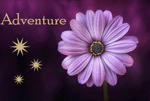 Adventure / Experiences, Travel etc