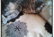 i'm a cat lover / des chats , les miens , mais aussi ceux d'internet ,