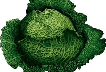 cabbage one