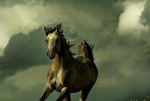 Horse - Koně