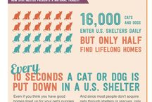 Why Spay or Neuter? / There are great reasons to spay or neuter your pet, including improving your pet's health.