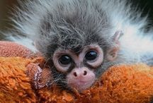 Monkey monkey world