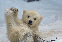 Cute Animals / by Kyrsten Daugherty