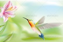 Tukan+Kolibri