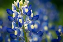 Central Texas Wildflowers / by KVUE-TV