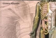 Anatomía. Publicaciones imprescindibles