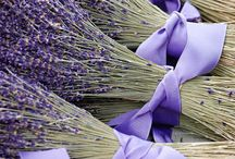 Gardening and Art: Lavendel