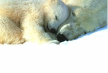 cute bear & dambo  キリン ♪