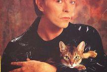 Celebrity Cat Lovers / Celebrity Cat Lovers