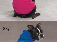 Pets: Swag / neat doggie and kitty swag, toys, clothes and  other stuff
