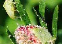 fiori e piante da aiutare