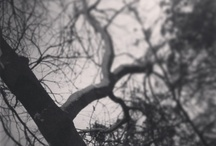 InstagramMadness / by Stacy Calvert