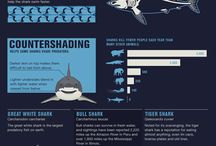 Different types of infographics
