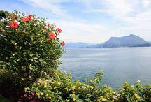 Italiaanse meren: tuinen aan het mooiste decor / Veel van de tuinen aan de Italiaanse meren hebben inmiddels bij de tuinliefhebbers een bekende klank gekregen en dat is volkomen terecht! Niet alleen profi teren de tuinen van het mooiste decor dat je je kunt voorstellen, ook is de beplanting van een hoog niveau. Zeker in het voorjaar zorgen deze tuinen met hun overdonderende bloei voor een onweerstaanbaar geheel. Natuurlijk worden er tijdens deze reis ook nog stadjes als Como en Stresa aangedaan.