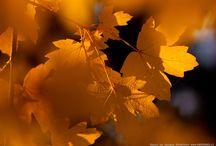 Осень / ****