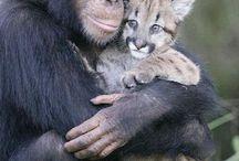 animalitos..