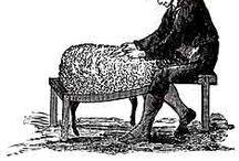 Sau / sheep