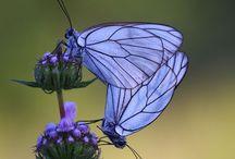 Butterflies / Delicate beauty